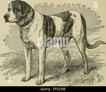 The dogs of Great Britain, America, and other countries (1919) - Stock Photo