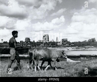 1962 - Life as Usual: A farmer near Siem Reap, Cambodia, is not impressed with Angkor Wat, the fantastic temple - Stock Photo