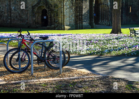 Leeds, UK. 17th Mar, 2016. The crocus were in full bloom on a lovely sunny spring mid afternoon day at Kirkstall - Stock Photo