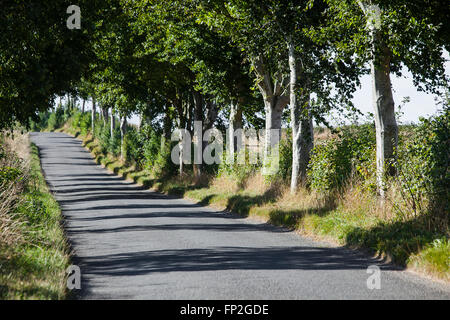 A tree lined road casting shadows from the trunks across the tarmac. - Stock Photo