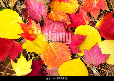 Colorful assortment of autumn leaves on ground. - Stock Photo