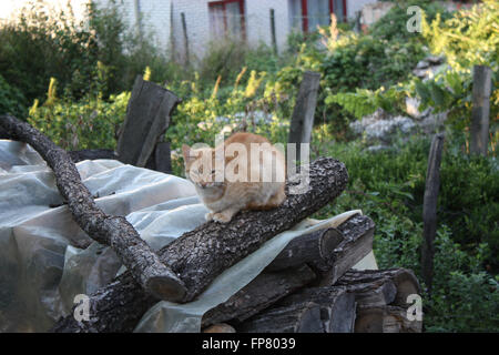 Ginger Cat Sitting On Stack Of Firewood - Stock Photo