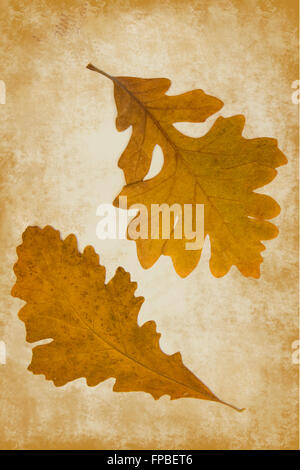 Autumn oak leaves on grunge background with copy space - Stock Photo