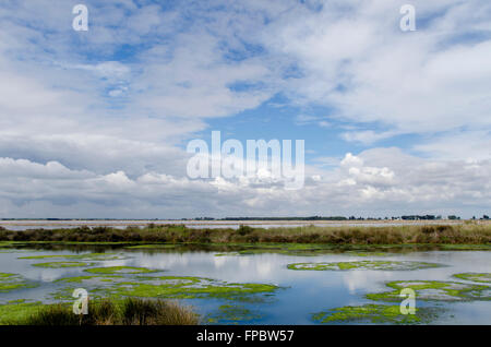 Camargue landscape on a day with clouds and blue sky reflected in the water - Stock Photo