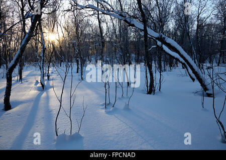 Snow on the ground, and covering branches, in Tromso. - Stock Photo