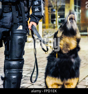 Belfast, Northern Ireland. 17 Mar 2016 - PSNI crowd control dog 'Scout' working with her handler at night. - Stock Photo