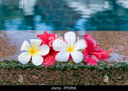 Still Life of Hibiscus and Plumeria Flowers at Edge of Pool in Peaceful Setting - Stock Photo