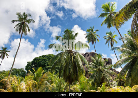 Scenic view of palm trees and lush green tropical vegetation in front of Eagles Nest Mountain, La Digue, Seychelles - Stock Photo