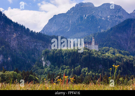 View across alpine wildflower meadow to Schloss Neuschwanstein castle in the Bavarian Alps in summer. Schwangau, - Stock Photo