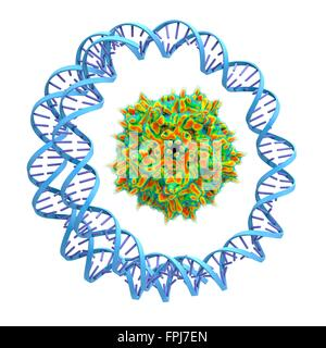 Adeno-associated virus wrapped around by a circular DNA str . Computer artwork. Adeno-associated viruses (AAVs) - Stock Photo