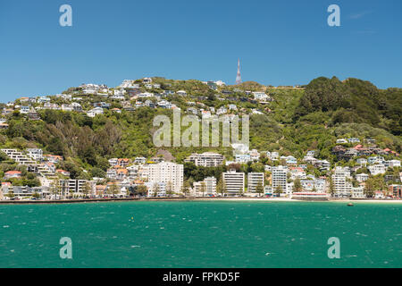 Wellington City residential area on Mount Victoria - view from the sea, New Zealand - Stock Photo