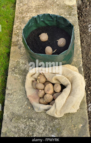 Planting Seed Potatoes In A Space Saving Growing Bag Or Patio Container Of  Compost, Variety