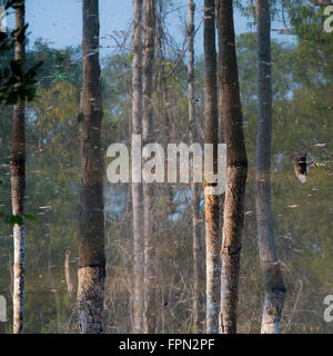 Reflections of trees in the moat around Preah Khan, Cambodia.  The photo is inverted. - Stock Photo