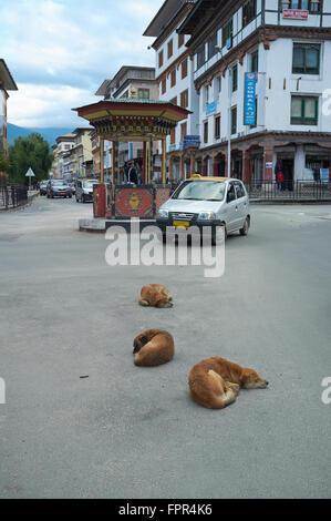 Stray dogs sleeping on the high street (Norzin Lam), Thimphu, Bhutan. - Stock Photo