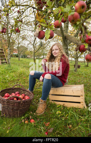 Teenage girl sitting on a crate under an apple tree in an apple orchard farm, Bavaria, Germany - Stock Photo