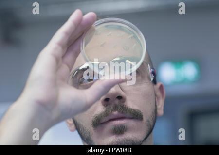 Scientist examining micro organisms in petri dish in a pharmacy laboratory, Freiburg Im Breisgau, Baden-Württemberg, - Stock Photo