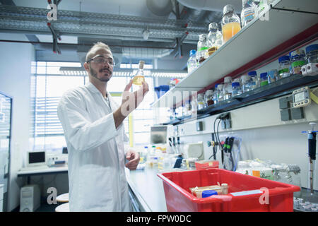 Young scientist working in a pharmacy laboratory, Freiburg Im Breisgau, Baden-Württemberg, Germany - Stock Photo