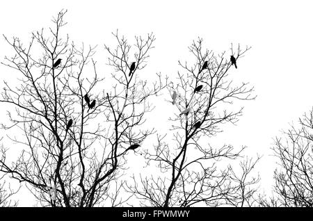 Birds in tree isolated on white background - Stock Photo
