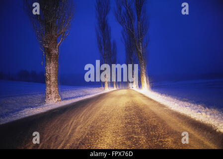 Snow covered poplar trees line the road in snow blizzard - Stock Photo