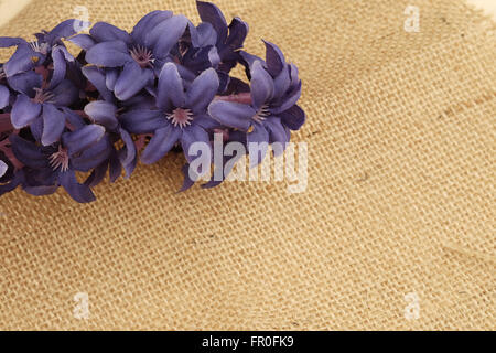 Background of a textured brown cotton fabric and flower - Stock Photo