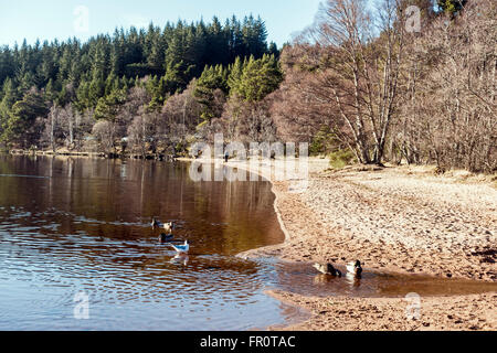 Loch Morlich in the Cairngorms region of Scotland on a calm and sunny spring day - Stock Photo