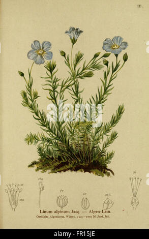 Atlas der Alpenflora (Plate 111) - Stock Photo