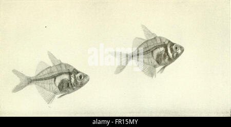 The complete aquarium book; the care and breeding of goldfish and tropical fishes (1936) - Stock Photo
