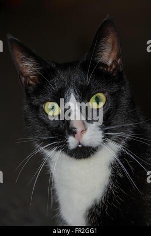 Black and White cat - Stock Photo