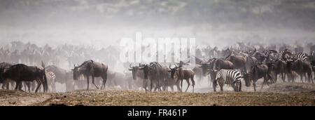 Serengeti great migration with wildebeests and zebras moving across a dry and dusty lake bed. - Stock Photo