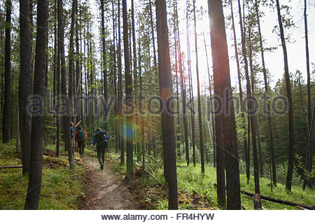 view from behind of three backpackers on a woodland trail - Stock Photo