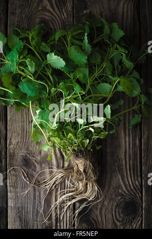 Green mint with roots on a wooden table vertical - Stock Photo