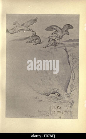 Birds from Moidart and elsewhere (Plate 5) - Stock Photo