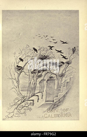 Birds from Moidart and elsewhere (Plate 44) - Stock Photo