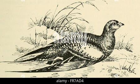 Bird-life of the borders, records of wild sport and natural history on moorland and sea (1889) - Stock Photo