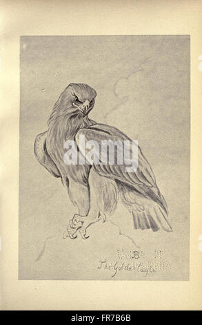 Birds from Moidart and elsewhere (Plate 4) - Stock Photo