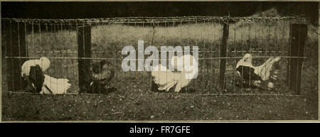 Our domestic animals, their habits, intelligence and usefulness; (1907) - Stock Photo