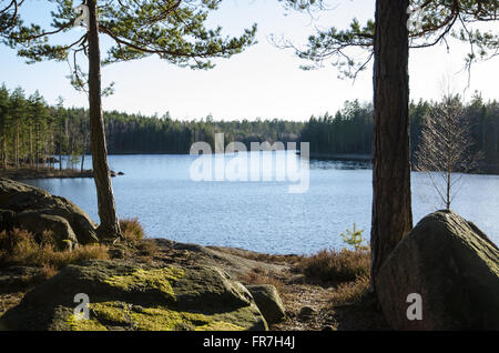 Backlit rocks and pine tree trunks by lakeside at spring in the Swedish woods - Stock Photo