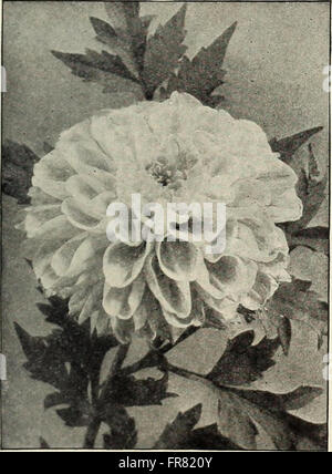 Rawson's garden manual - W.W. Rawson and Co. (1910) - Stock Photo