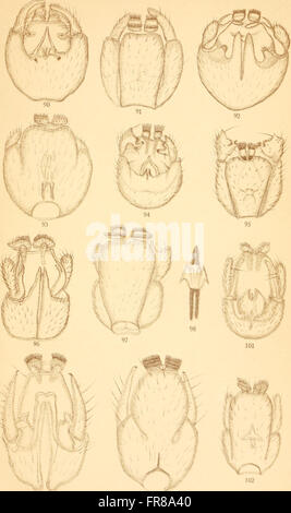 Acta Soc. pro Fauna et Flora Fennica (1912) - Stock Photo