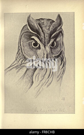 Birds from Moidart and elsewhere (Plate 13) - Stock Photo