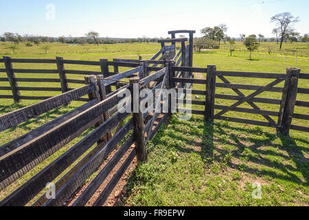Fenced for shipment of cattle ranching in the Pantanal farm - Stock Photo