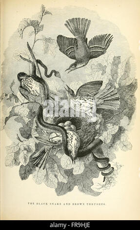 Illustrated natural history of the animal kingdom, being a systematic and popular description of the habits, structure, - Stock Photo