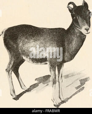 The animans and man; an elementary textbook of zoology and human physiology (1911) - Stock Photo