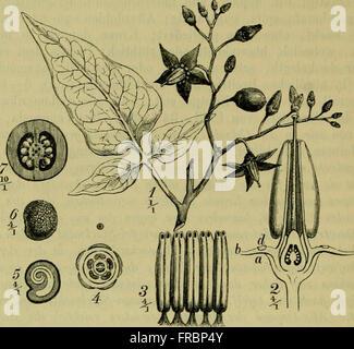Deutsche Flora. Pharmaceutisch-medicinische Botanik. Ein Grundriss der systematischen Botanik zum Selbststudium - Stock Photo