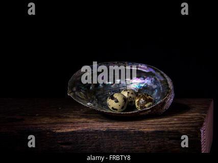 Quail eggs in an abalone shell Stock Photo