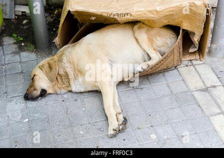 Dog sleeping rough on the street in a cardboard box. - Stock Photo