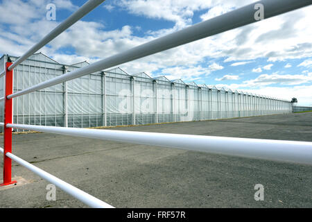 Tangmere Airfield nursery, One of Europe's largest pepper growing nurseries, Chichester, UK - Stock Photo