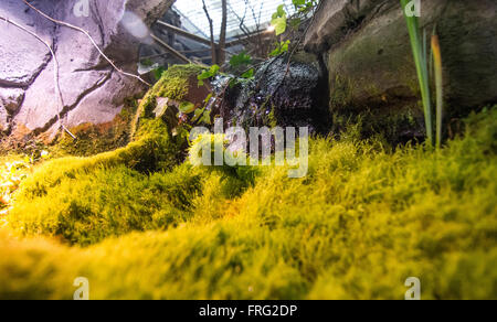 Gijon, Spain. 22nd March, 2016. A small waterfall at Aquarium of Gijon World Water Day on March 22, 2016 in Gijon, - Stock Photo