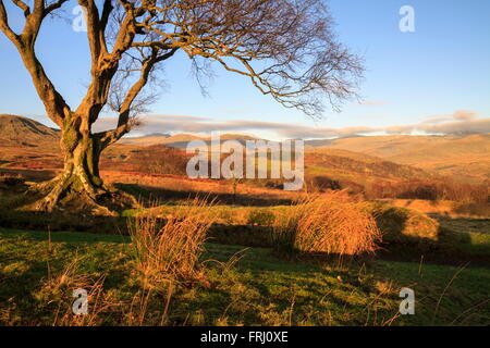View of the Carnedd mountains from above Capel Curig - Stock Photo