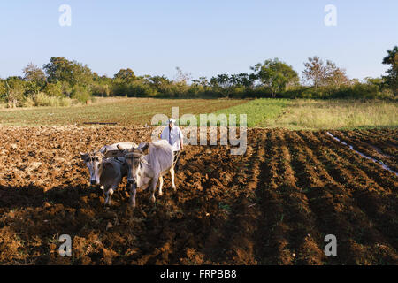 Farming and cultivations in Latin America. High angle view of middle aged hispanic farmer manually ploughing the - Stock Photo
